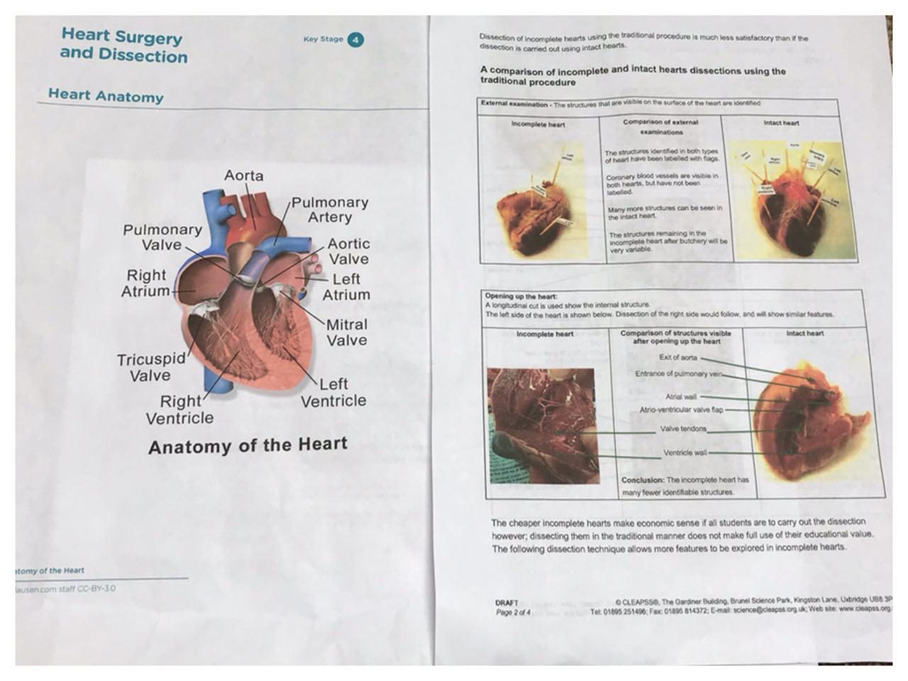 Sheep Heart Dissection in Science! » The Tuition Club